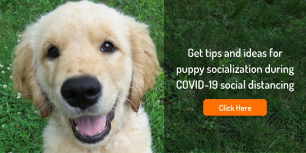 how to socialize your puppy during quarantine