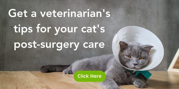 Where to put your cat and how to care for them after surgery
