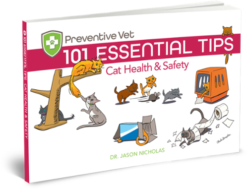 101 Essential Cat Health and Safety Tips