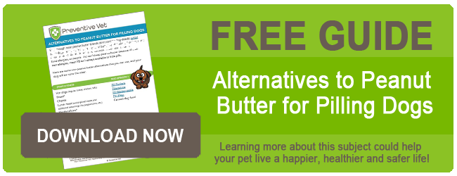 Alternatives to Peanut Butter for Pilling Dogs