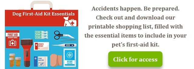 Dog first-aid kit essentials