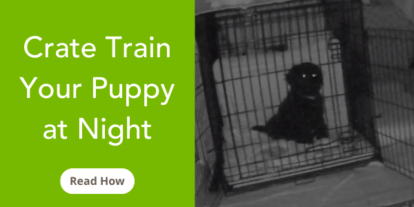 how-to-crate-train-your-puppy-at-night