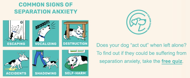 find out if your dog has separation anxiety