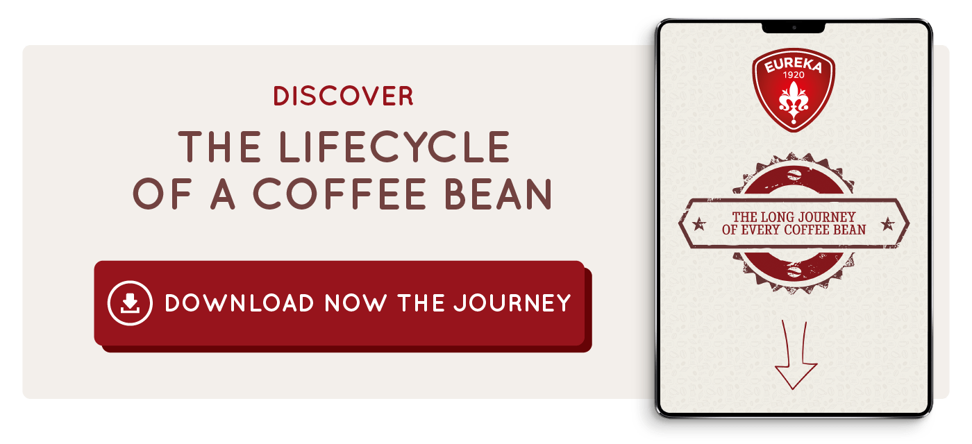Download-lifecycle-coffee-bean