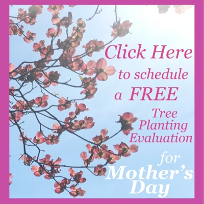 Schedule a FREE Tree Planting Evaluation for Mother's Day