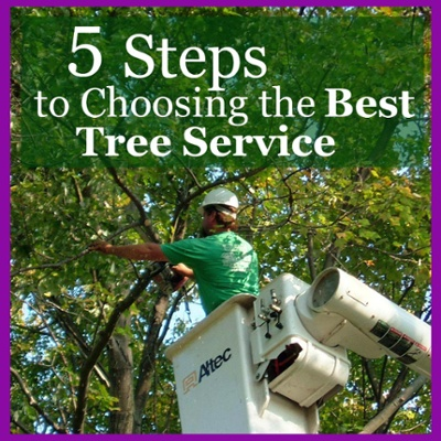 5 Steps to choosing the best tree service