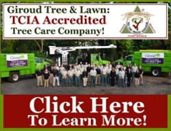 Giroud is TCIA Accredited Tree Care Company