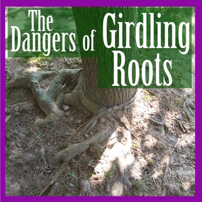 The Dangers of Girdling Roots