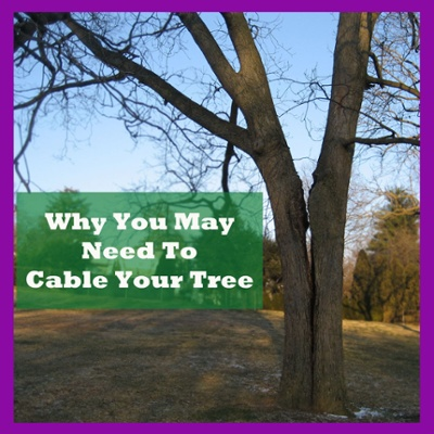 Why You May Need to have your tree cabled