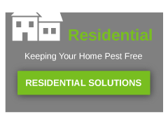 residential pest solutions