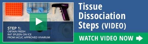 Watch Video Tissue Dissociation Steps