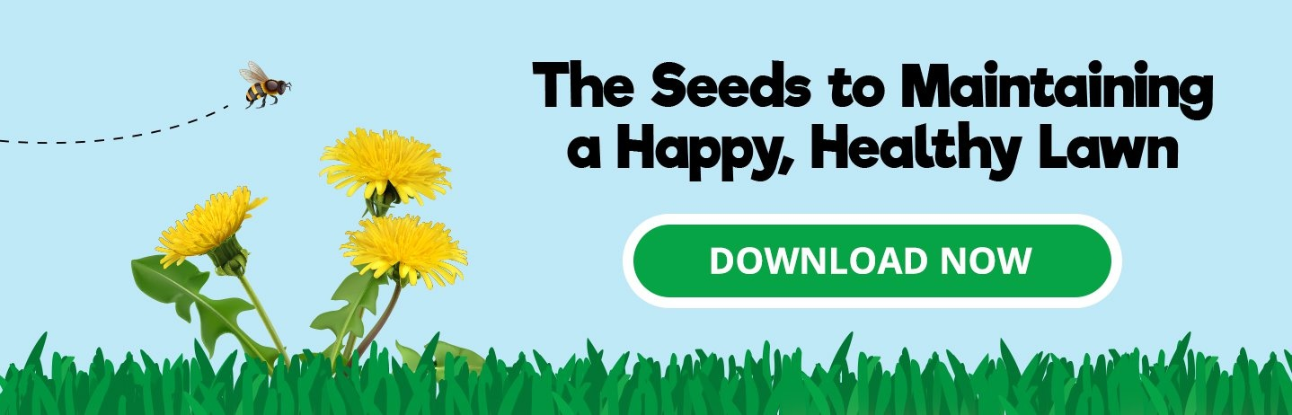 The seeds to maintaining a happy, healthy lawn