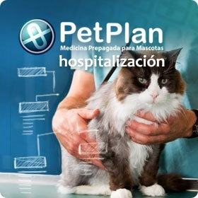 donde hospitalizar a mi mascota