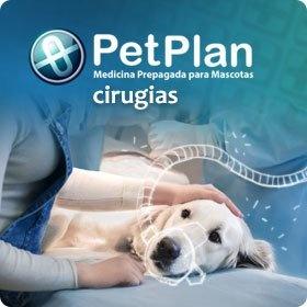 seguros para mascotas y eps para mascotas