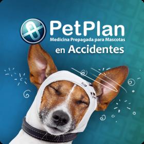 seguros para mascotas