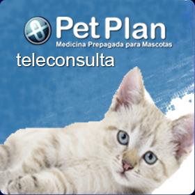 tele consulta veterinaria