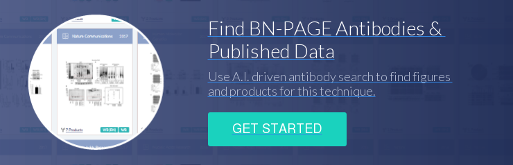 Find BN-PAGE Antibodies &  Published Data Use A.I. driven antibody search to find figures  and products for this technique. Get Started