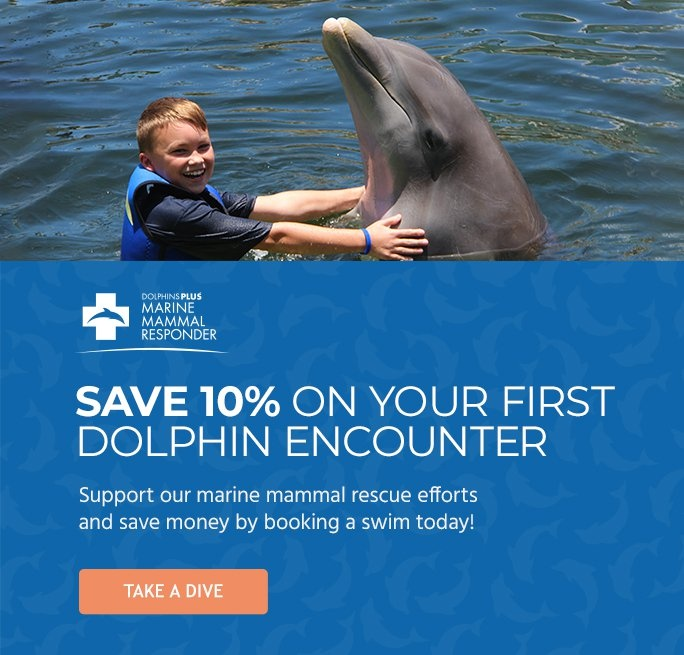 Save 10% On Your First Dolphin Encounter
