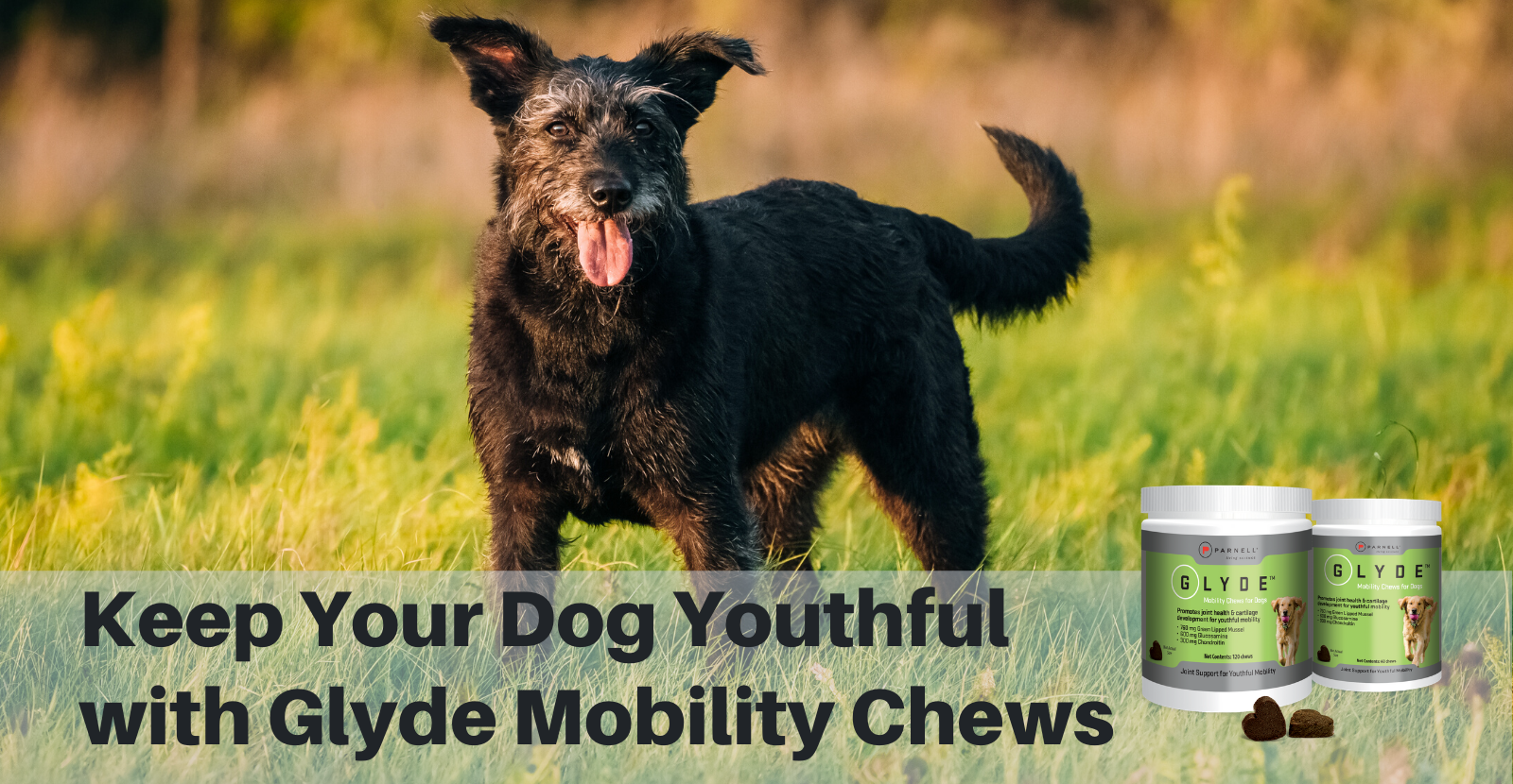 Keep Your Dog Youthful with Glyde Mobility Chews