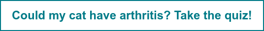 Could my cat have arthritis? Take the quiz!