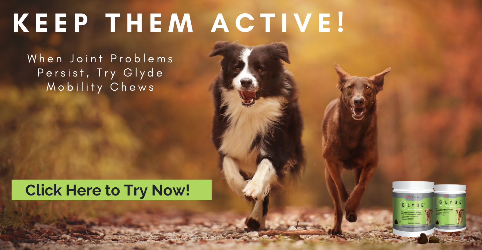 Keep Your Dogs Active with Glyde Mobility Chews