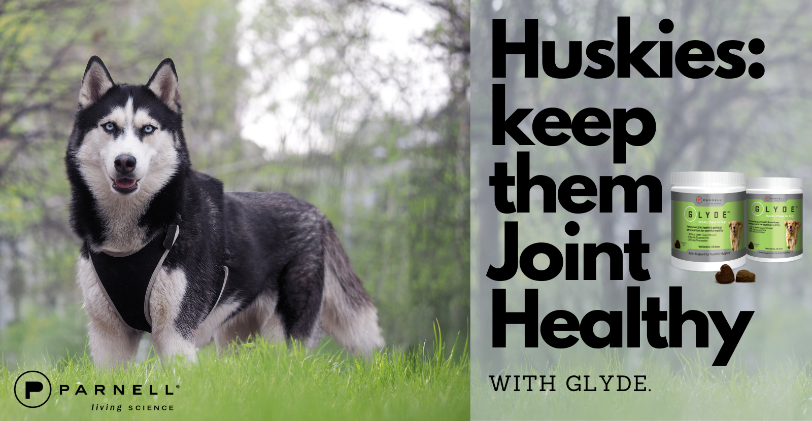 Joint Health is Key for Huskies