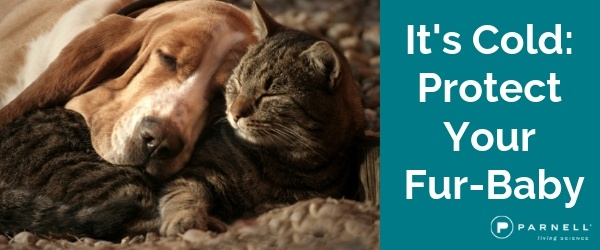 It's Cold! Protect Your Fur-Baby!