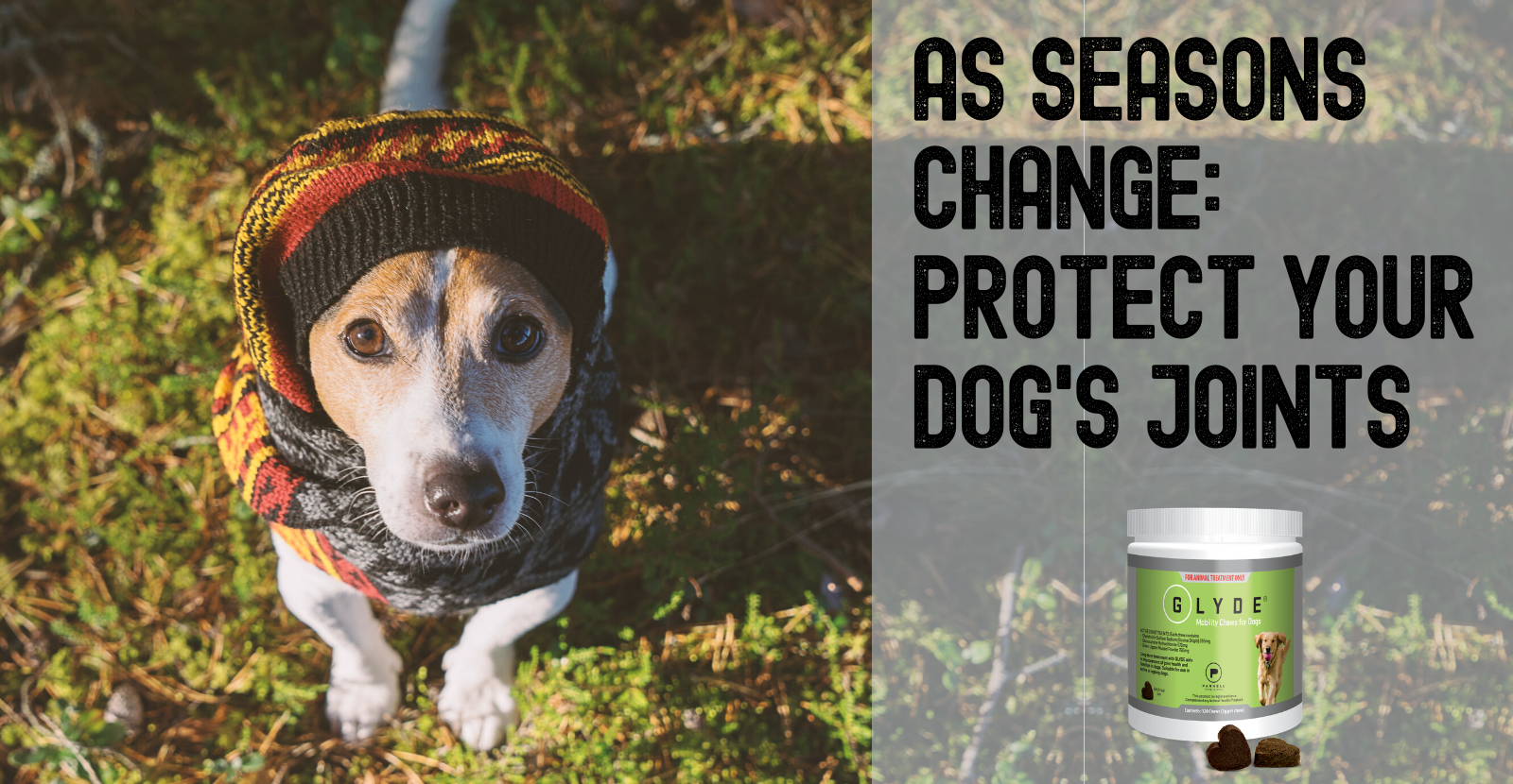 As seasons change, protect your dog's joints