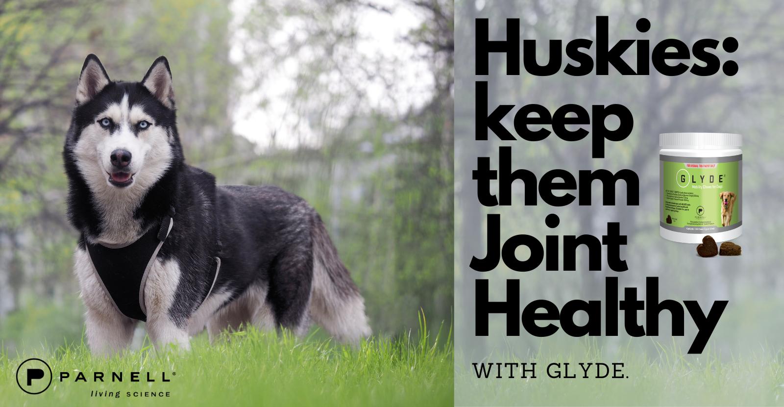 Huskies Need Good Joint Health