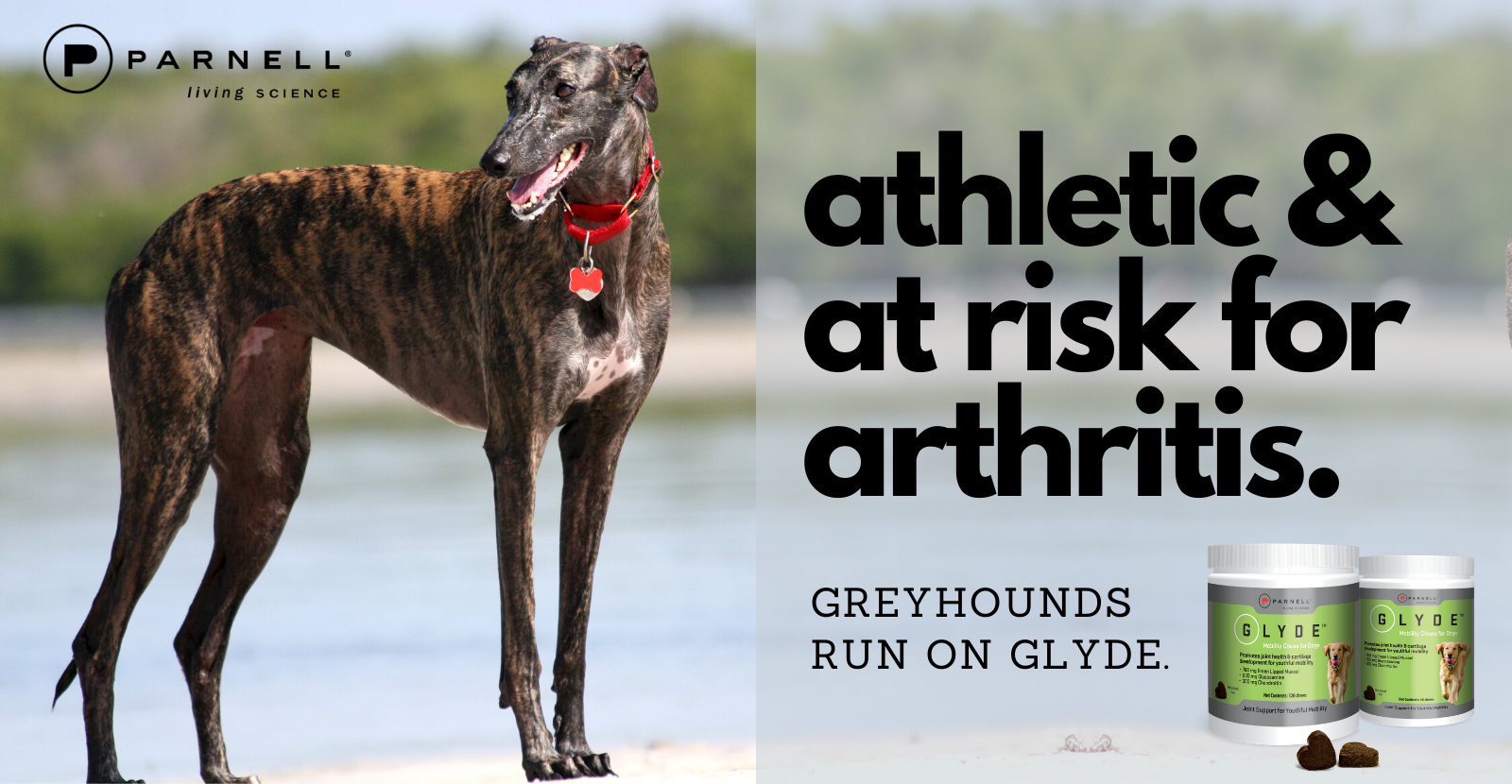 Greyhounds Run on Glyde