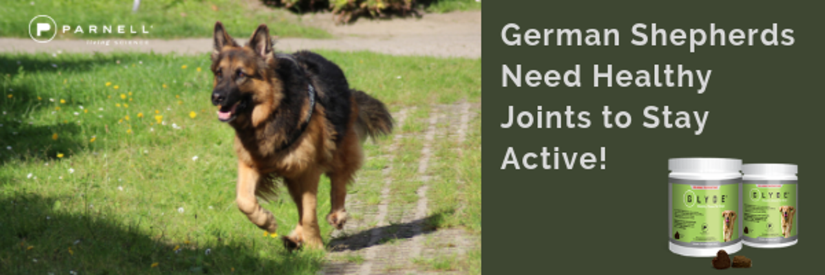 GSDs need Glyde to Stay Active