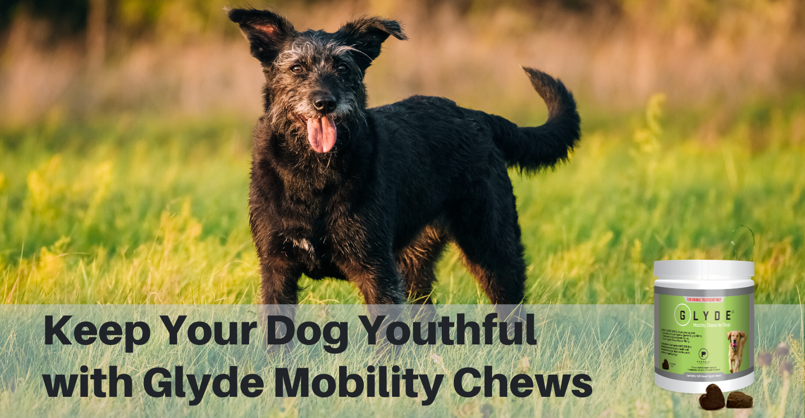 Keep Your Dog Youthful with Glyde