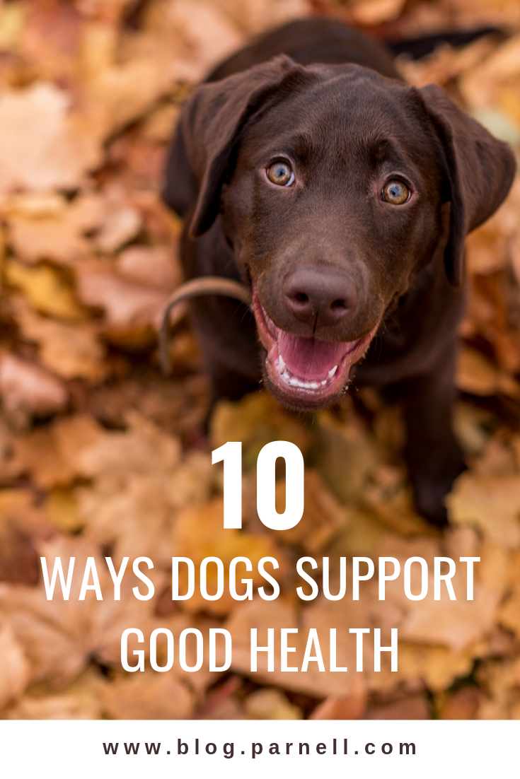 10 Ways Dogs Support Good Health