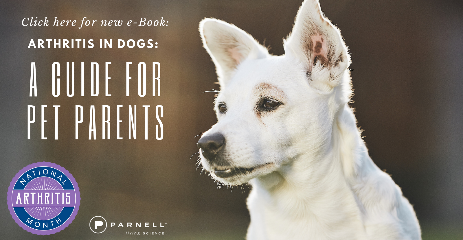 Get Your Arthritis in Dogs eBook