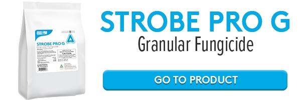 Strobe Pro G Online