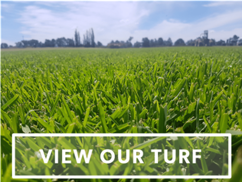Grass Varieties | Turf Varieties