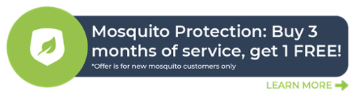 Buy three months of mosquito protection and get the fourth month FREE. Sign up today!