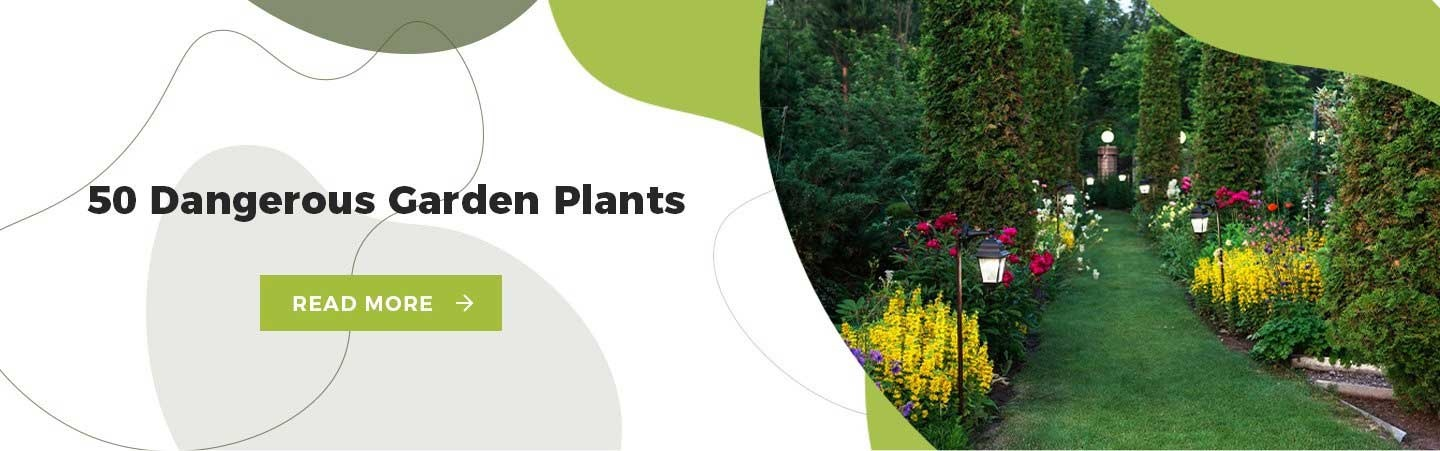 Dangerous Garden Plants for Dogs