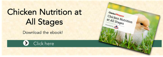 Chicken_Nutrition_Ebook