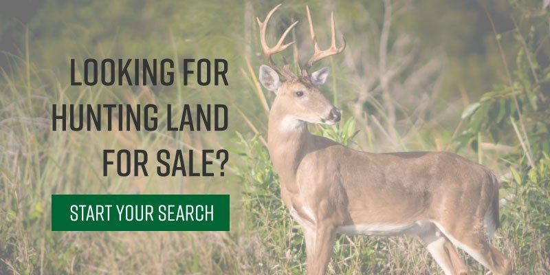 Image of deer on hunting land for sale