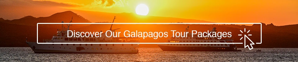 Discover Our Galapagos Tour Packages!
