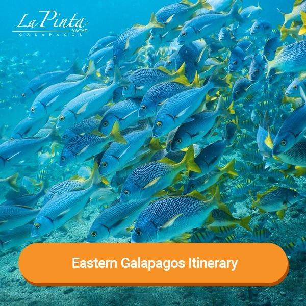 Eastern Galapagos Itinerary - La Pinta