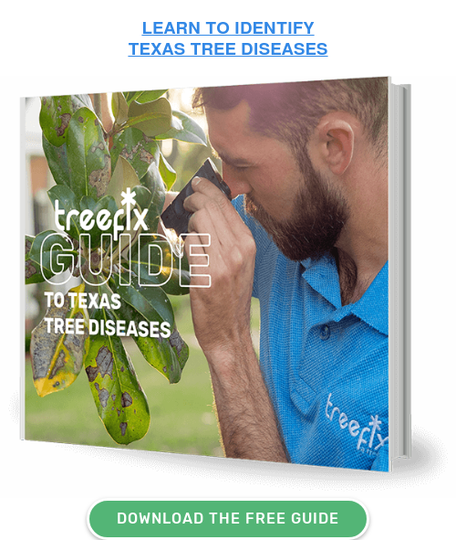 LEARN TO IDENTIFY  TEXAS TREE DISEASES DOWNLOAD THE FREE GUIDE