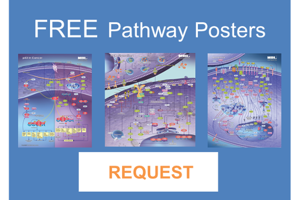 p53, Apoptosis, Autophagy and Other Pathway Posters