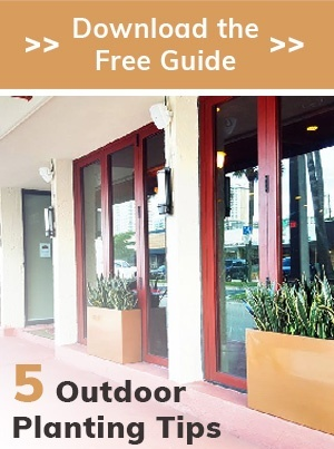 5 Outdoor Planting Tips - Download the free guide