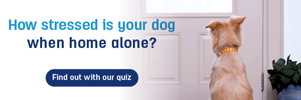 How stressed is your dog when home alone, take the quiz