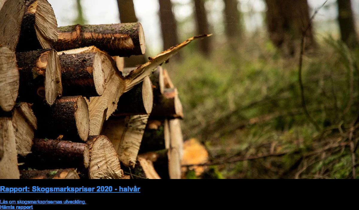 Rapport: Skogsmarkspriser 2020 - halvår  Läs om skogsmarksprisernas utveckling. Hämta rapport