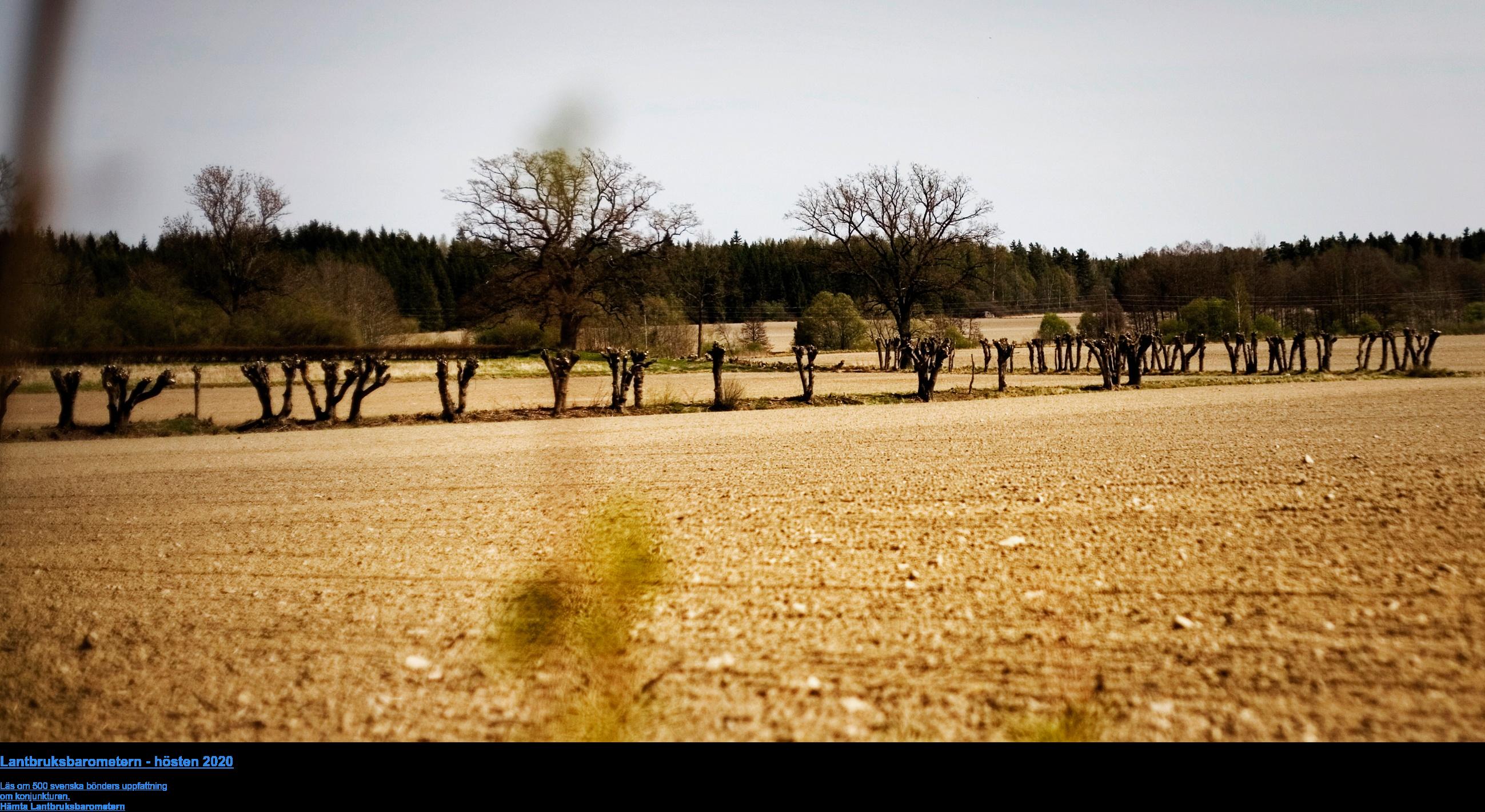 Lantbruksbarometern - hösten 2020  Läs om 500 svenska bönders uppfattning  om konjunkturen. Hämta Lantbruksbarometern