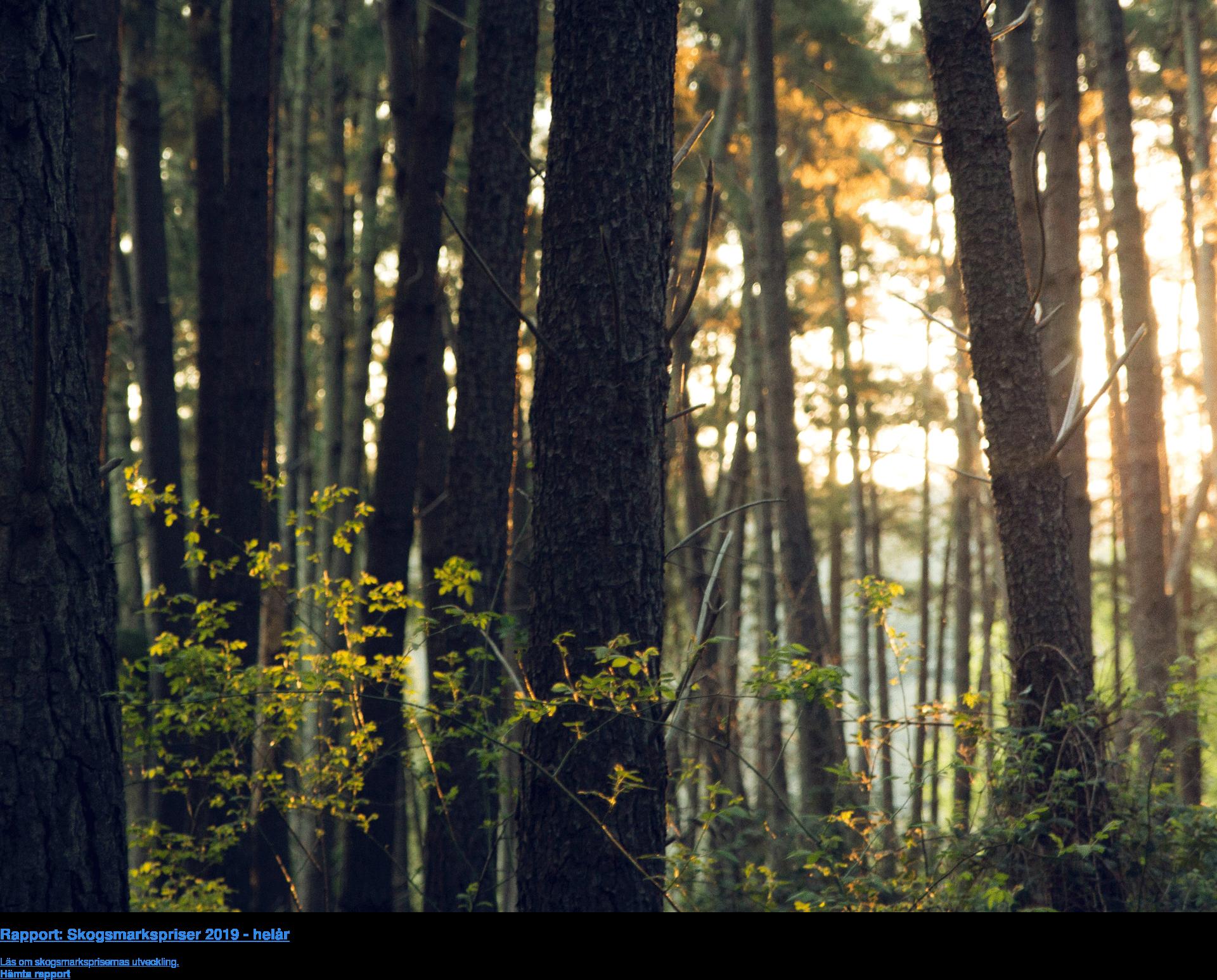 Rapport: Skogsmarkspriser 2019 - helår  Läs om skogsmarksprisernas utveckling. Hämta rapport