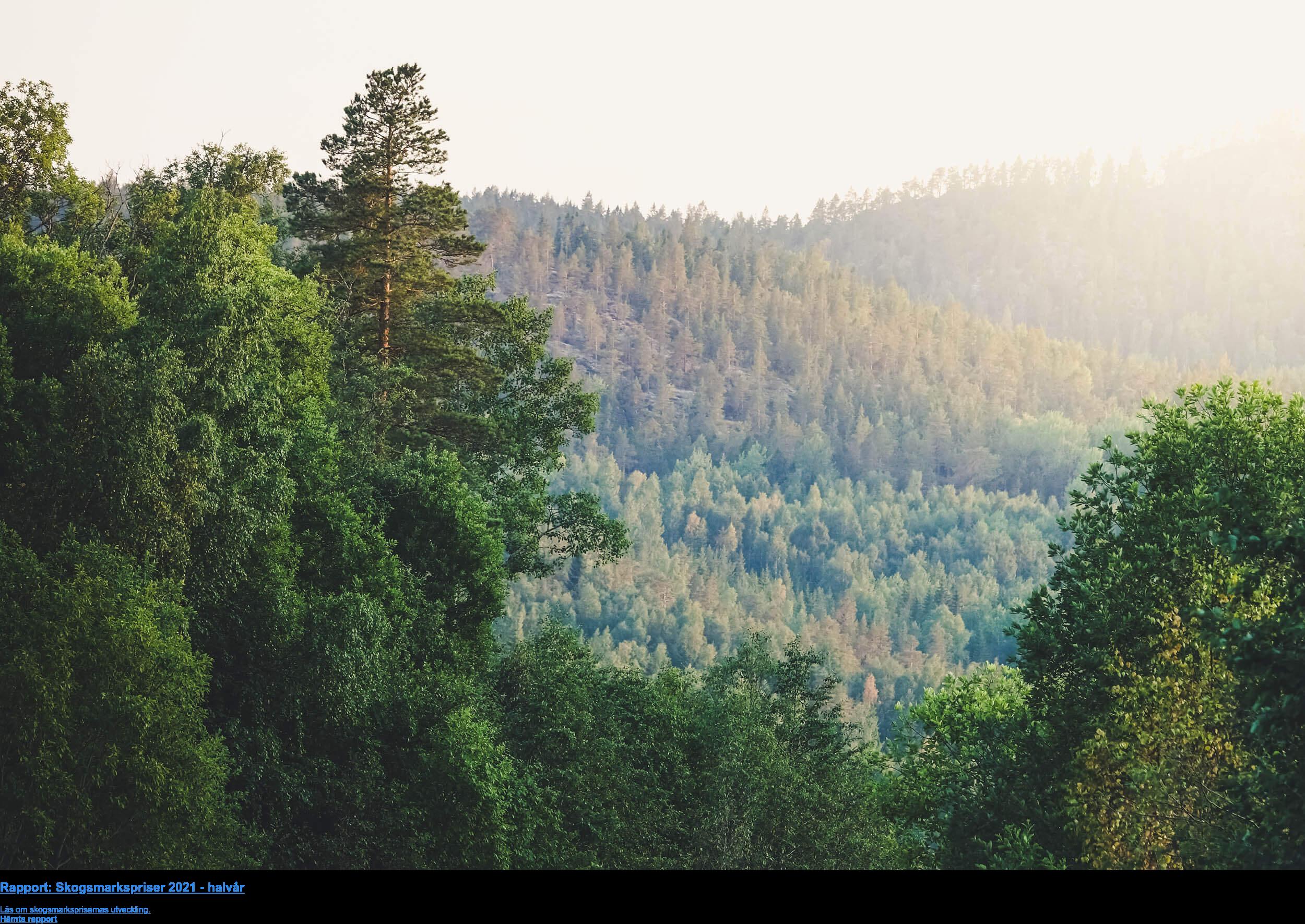 Rapport: Skogsmarkspriser 2021 - halvår  Läs om skogsmarksprisernas utveckling. Hämta rapport